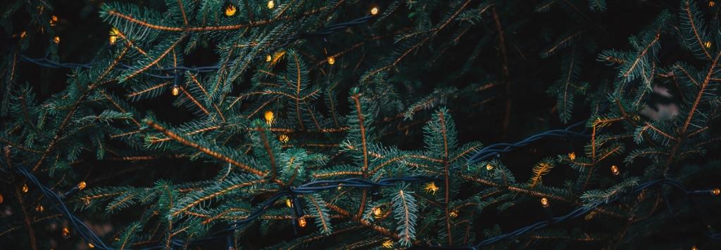 Коледните елхи на Amazon увреждат околната среда